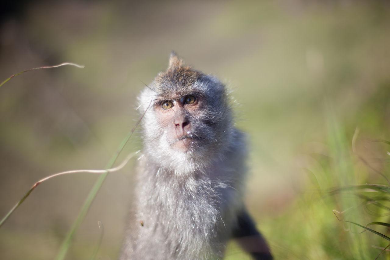 Beautiful stock photos of monkey, Animal Head, Animal Themes, Day, Focus On Foreground