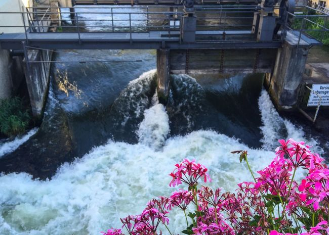 Water Flower Freshness Plant Fragility Outdoors Flowing Water Canal Growth Nature Day No People Botany Bridge Springtime Domestic Animals Beauty In Nature Red In Bloom Blossom