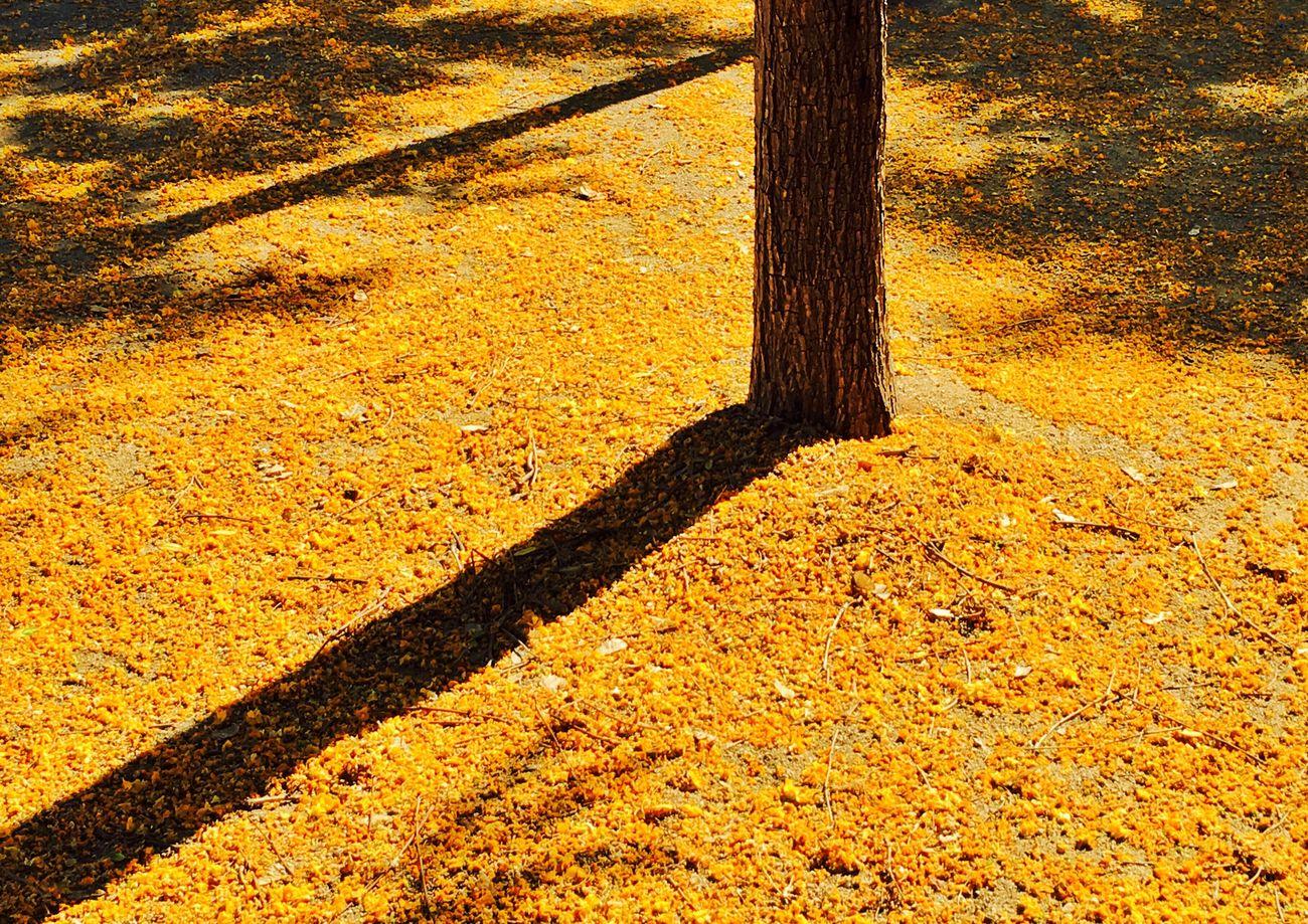 Petals and shadows carpet..... Mi Serie Minimal