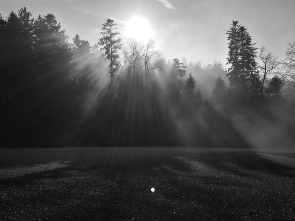 Tree Sunlight Darkness And Light BLCK&WHT Ladder To Heaven Sky Sunlight Black And White Reflection Tree Nature Photography Nature Outdoors Foggy Sunrise Foggy Tree Foggy Sky