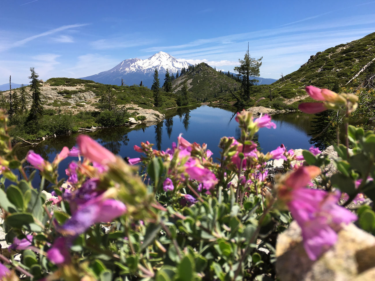Beauty In Nature Day Flower Flower Head Heart Lake Landscape Mountain Mountain Lake Mt. Shasta Nature No People Northern California Outdoors Plant Scenics Siskiyou County Sky Tree Water Wildflower