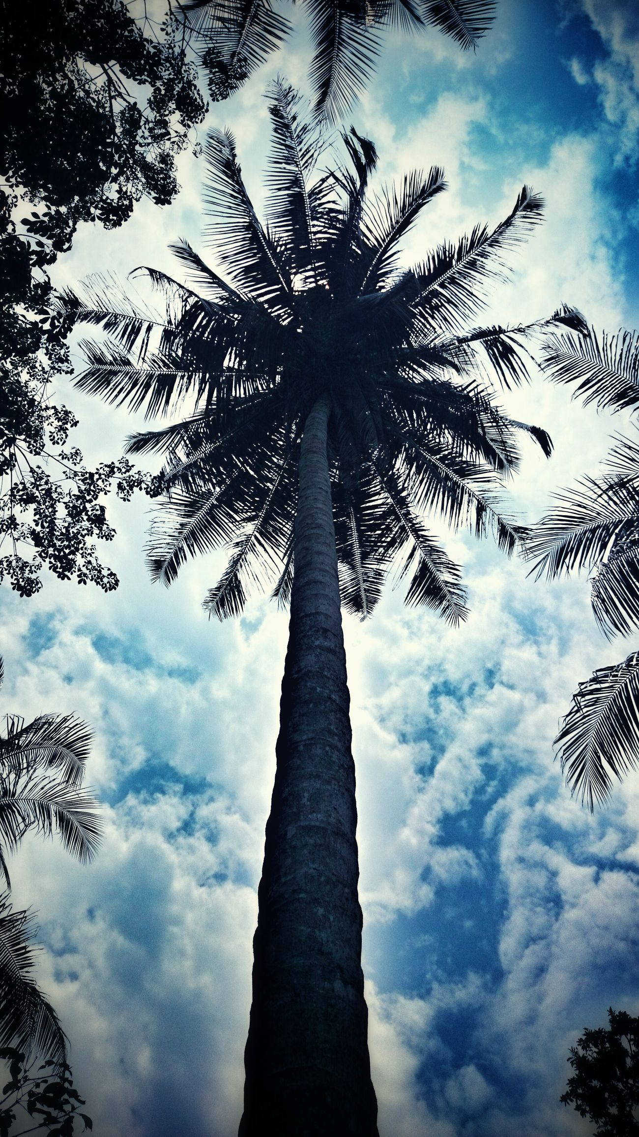 Look Up And Thrive Taking Photos Hello World