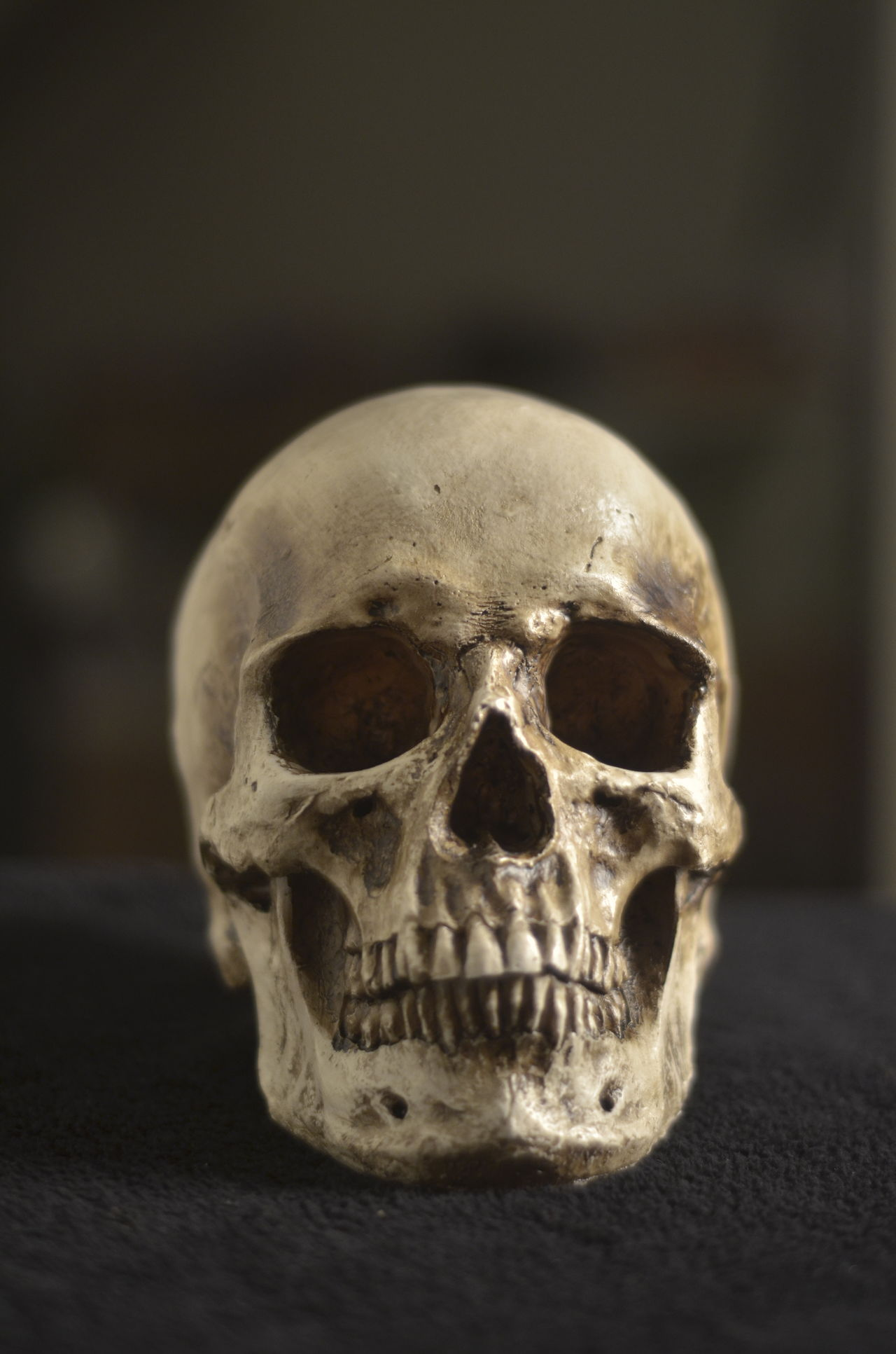 Beautiful stock photos of totenkopf, Close-Up, Dead, Death, Focus On Foreground