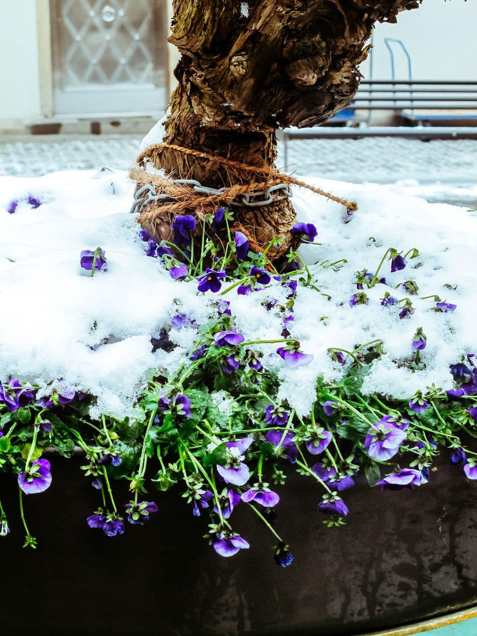 nature, flower, snow, growth, day, winter, cold temperature, beauty in nature, fragility, no people, outdoors, freshness, plant, close-up, tree