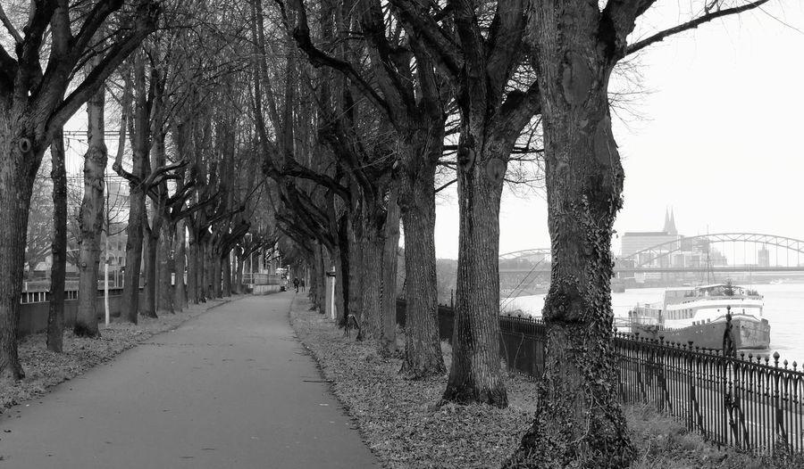 Vanishing Point Monochrome Fortheloveofblackandwhite Blackandwhite Black And White Collection  Trees TreePorn Tree_collection  Black And White Rule Of Thirds Kölner Dom