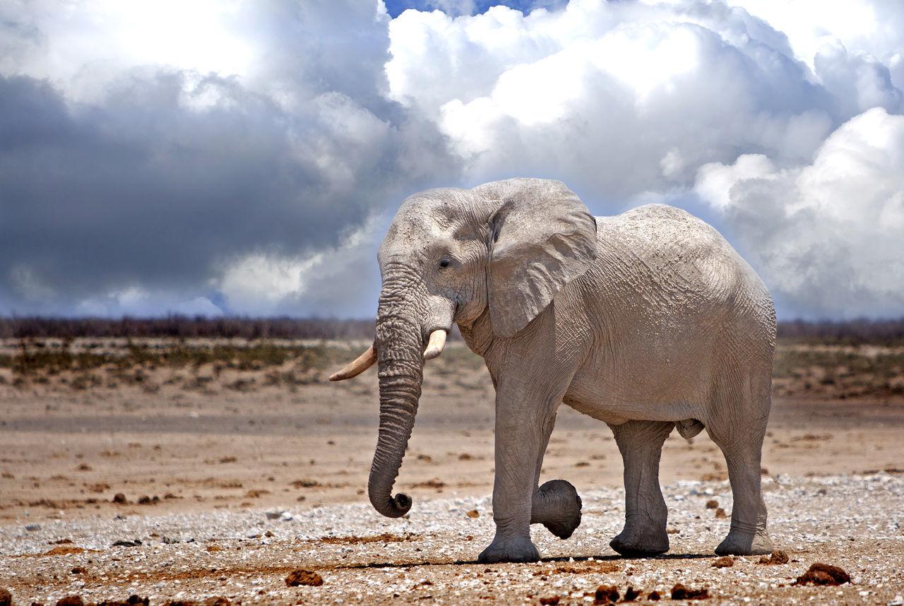Beautiful stock photos of tiere,  Animal Themes,  Animal Wildlife,  Animals In The Wild,  Cloud - Sky