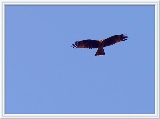 2015.10.24 鳥 相模湖