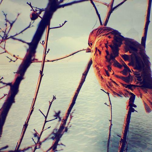 Daydreaming hello my dream