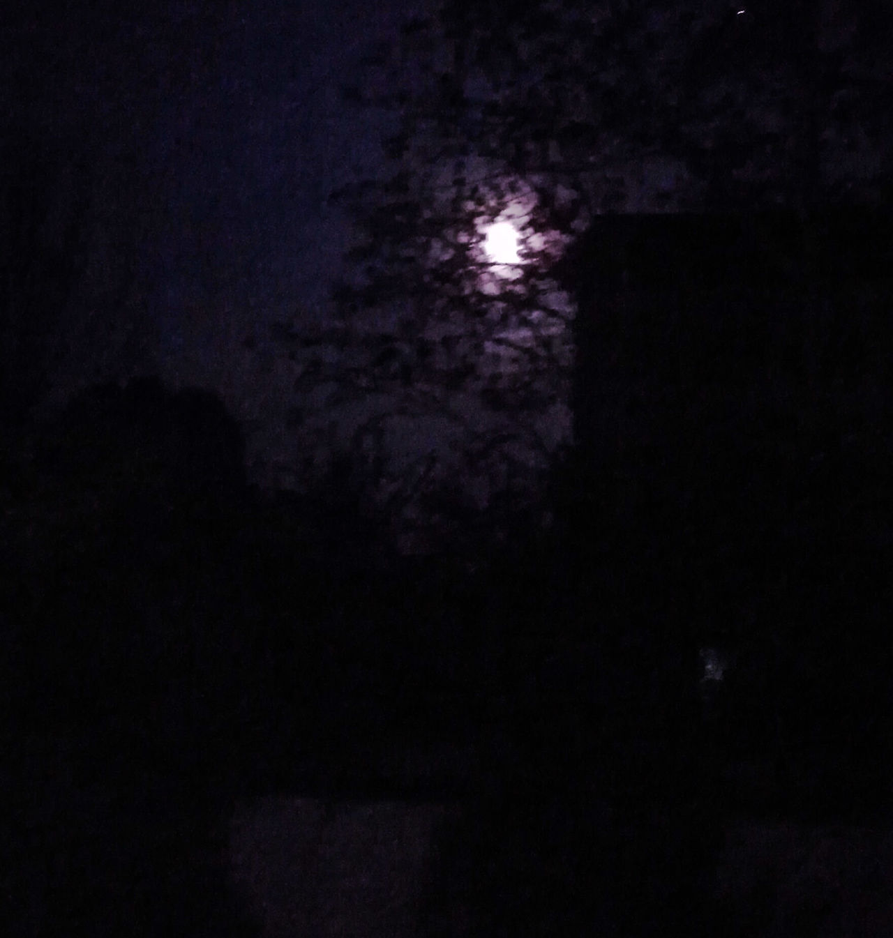 Purple moon Dark Night Nature Star - Space Scenics Astronomy Beauty In Nature Sky Space No People Star Field Outdoors Galaxy Moon Purple Violet Darkness Dark Mystery Dream Tree Shadow
