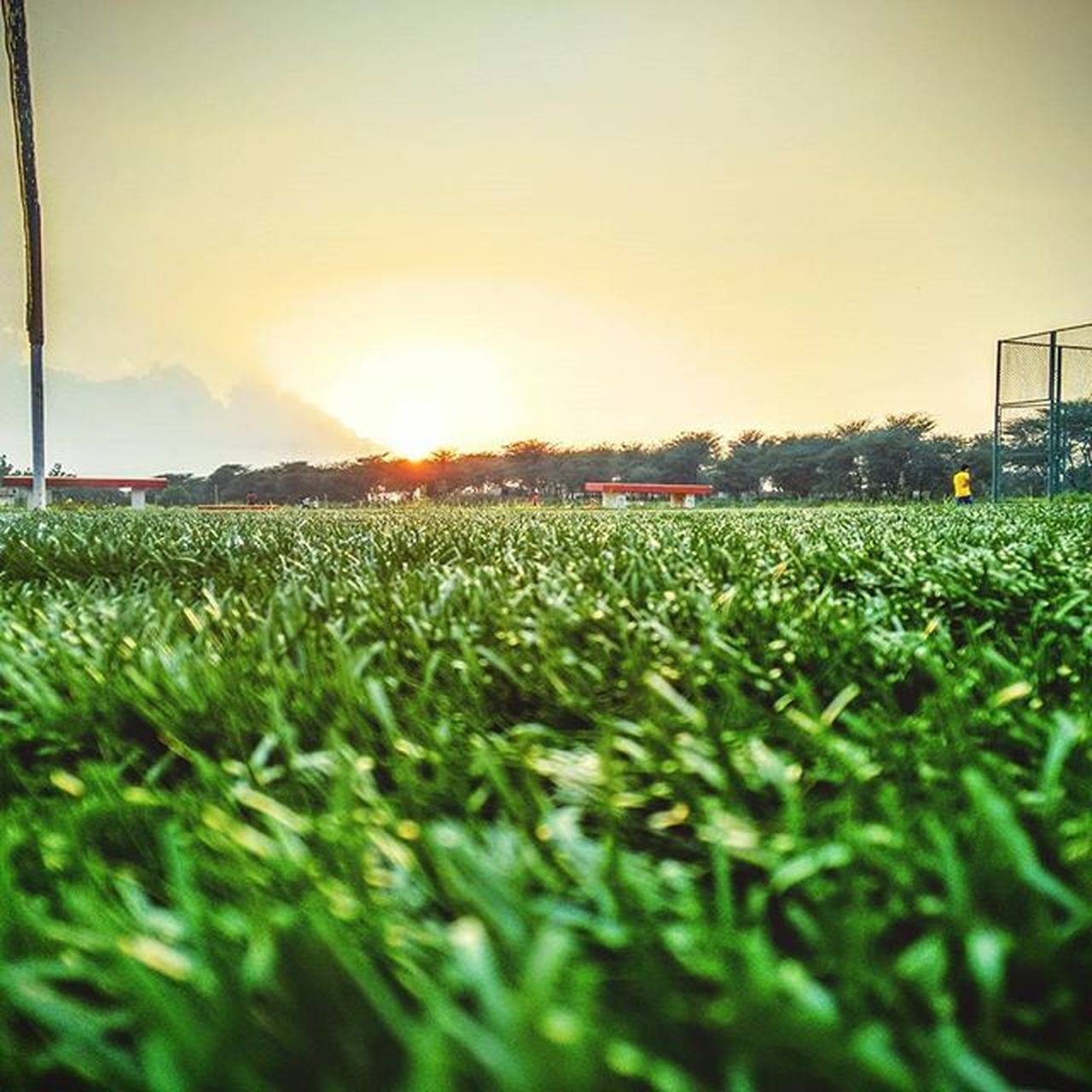 field, agriculture, tranquil scene, sunset, nature, growth, sky, tranquility, grass, rural scene, green color, beauty in nature, no people, outdoors, scenics, plant, soccer field, tree, day, freshness