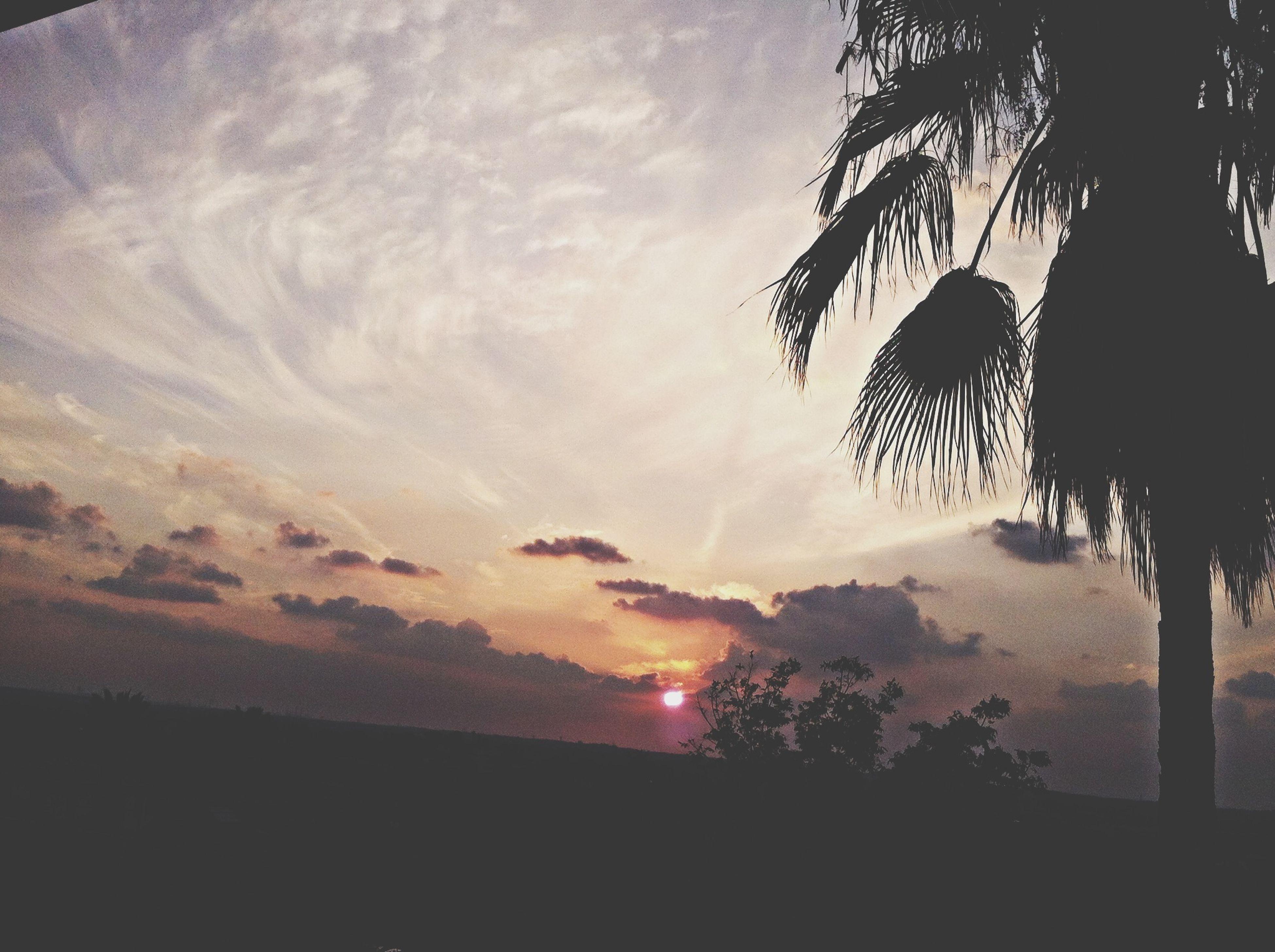 silhouette, sky, tree, tranquility, scenics, tranquil scene, beauty in nature, sunset, cloud - sky, nature, idyllic, sun, palm tree, cloud, outdoors, cloudy, sunlight, dusk, sunbeam, no people