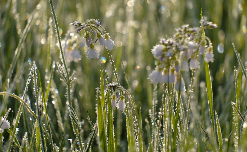 Beauty In Nature Close-up Day Early Morning Field Flower Fragility Freshness Grass Growth Ice Cristal Ice Cristals On Flower Nature No People Outdoors Plant Tranquility Water Drops On Grass Blades White Frost