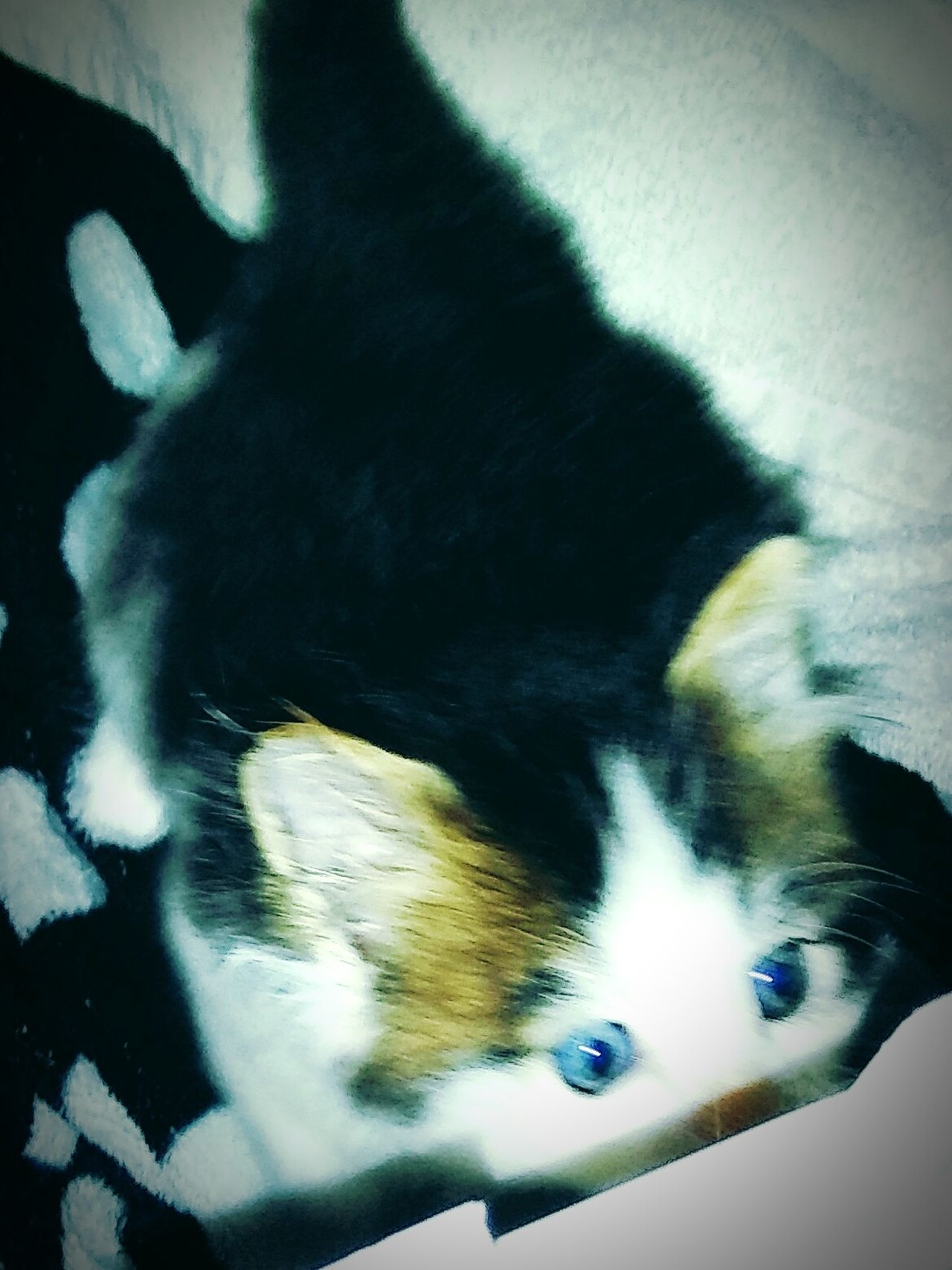 Peekaboo!!😝😝💜💙💚 Precious Little Moments Taking Photos Hello World Cheese! Hi! Animals Pawsome Loveallanimals Tabbysofinstagram Beautiful Kitties Paws And Purrs Beautiful Kittens Bayareaphotography Catsofeyeem Catlovers Catstarcat ❤️🔥❤️ Cat Eyes TabbyCat Blue Eyed Kitten Beautiful Eyes