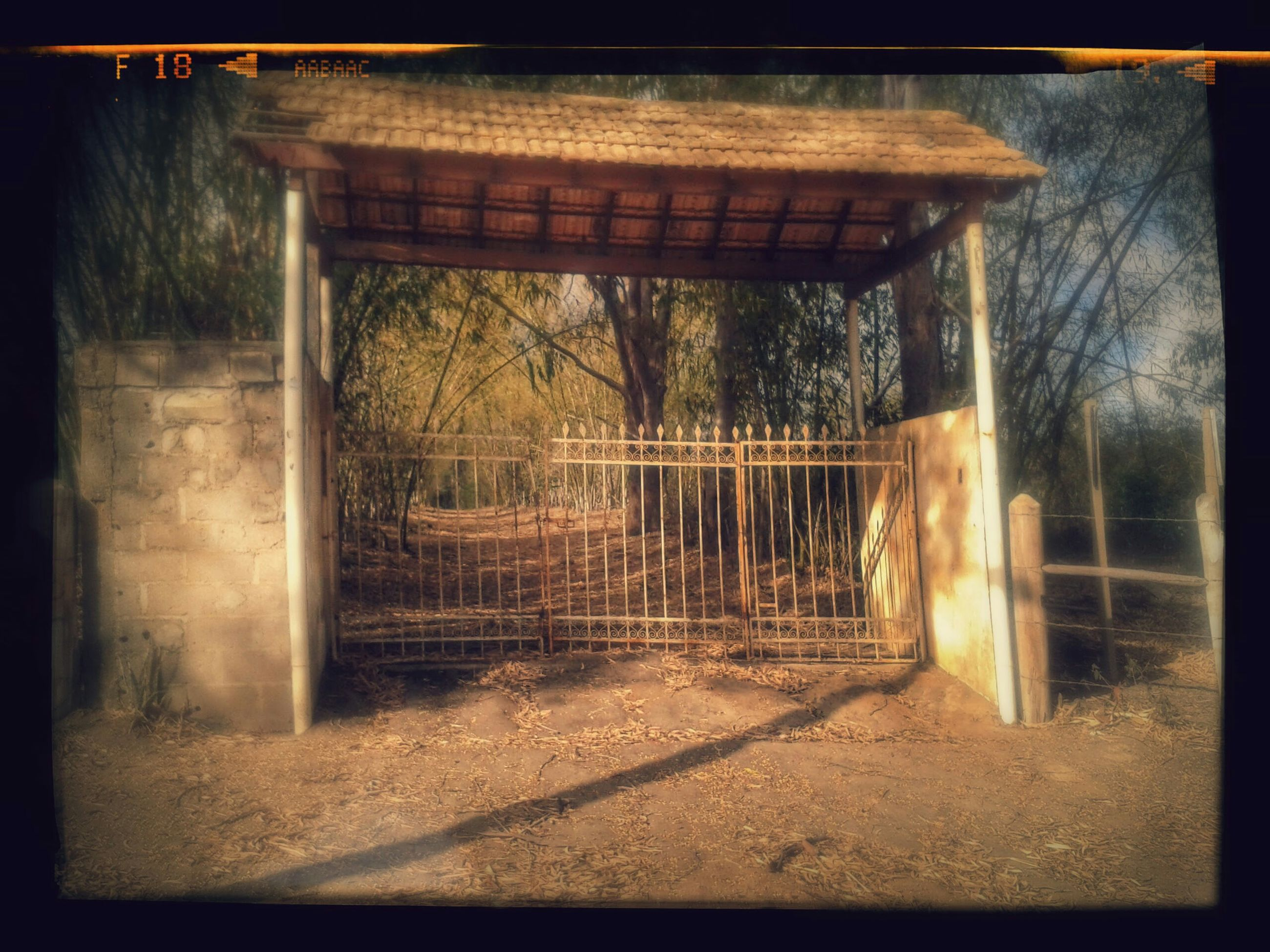 transfer print, auto post production filter, tree, built structure, architecture, sunlight, fence, indoors, gate, house, metal, no people, window, day, railing, closed, metal grate, building exterior, wall - building feature