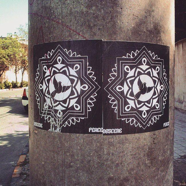 Ob5cene peace paste ups. Streetart Streets Sticker Pasteup Wheatpasteart Wheatpaste Wheatglue Peace Peacebird Ob5cene Mashhad