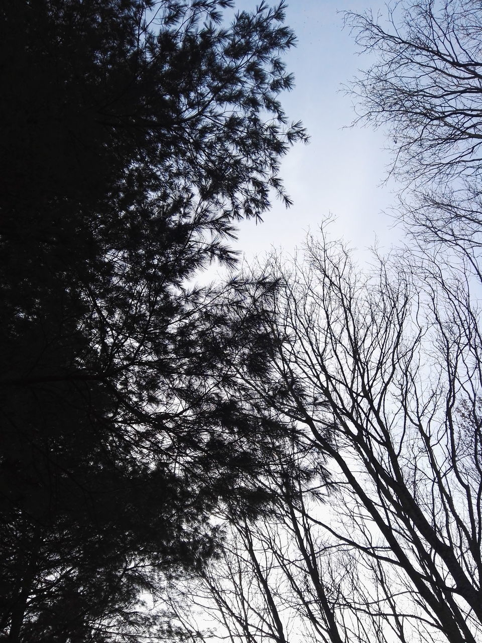 tree, low angle view, nature, branch, growth, beauty in nature, no people, day, outdoors, sky, tranquility, forest, clear sky