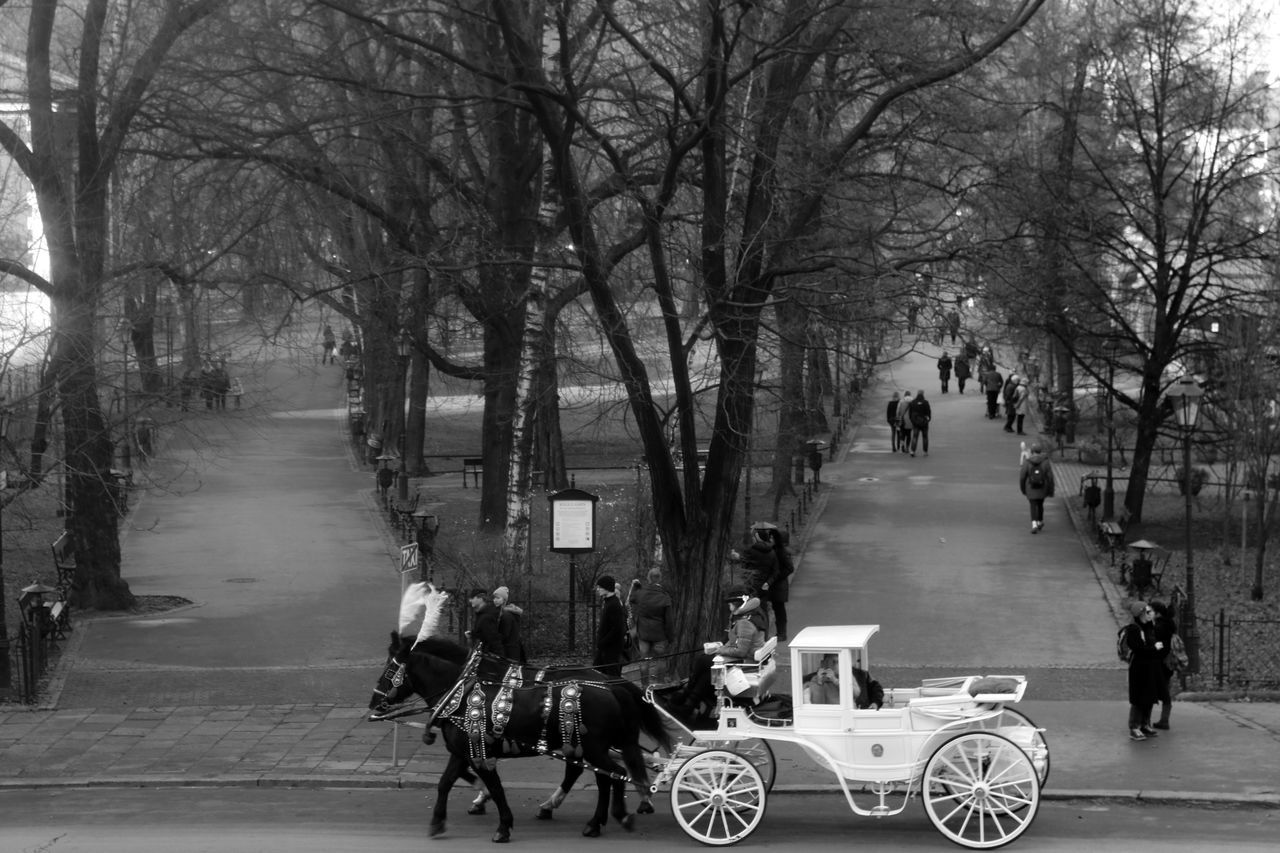 tree, road, real people, street, horse, transportation, bare tree, domestic animals, rear view, riding, men, the way forward, outdoors, walking, day, land vehicle, bicycle, dog, one animal, mammal, horse cart, women, city, nature, adult, people