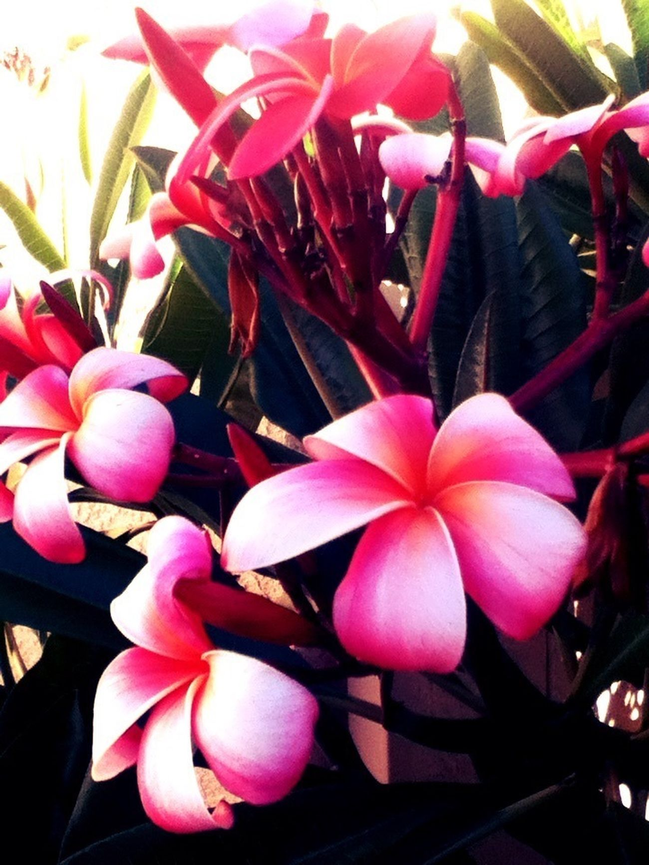 Taking pictures of flowers that one day ☀