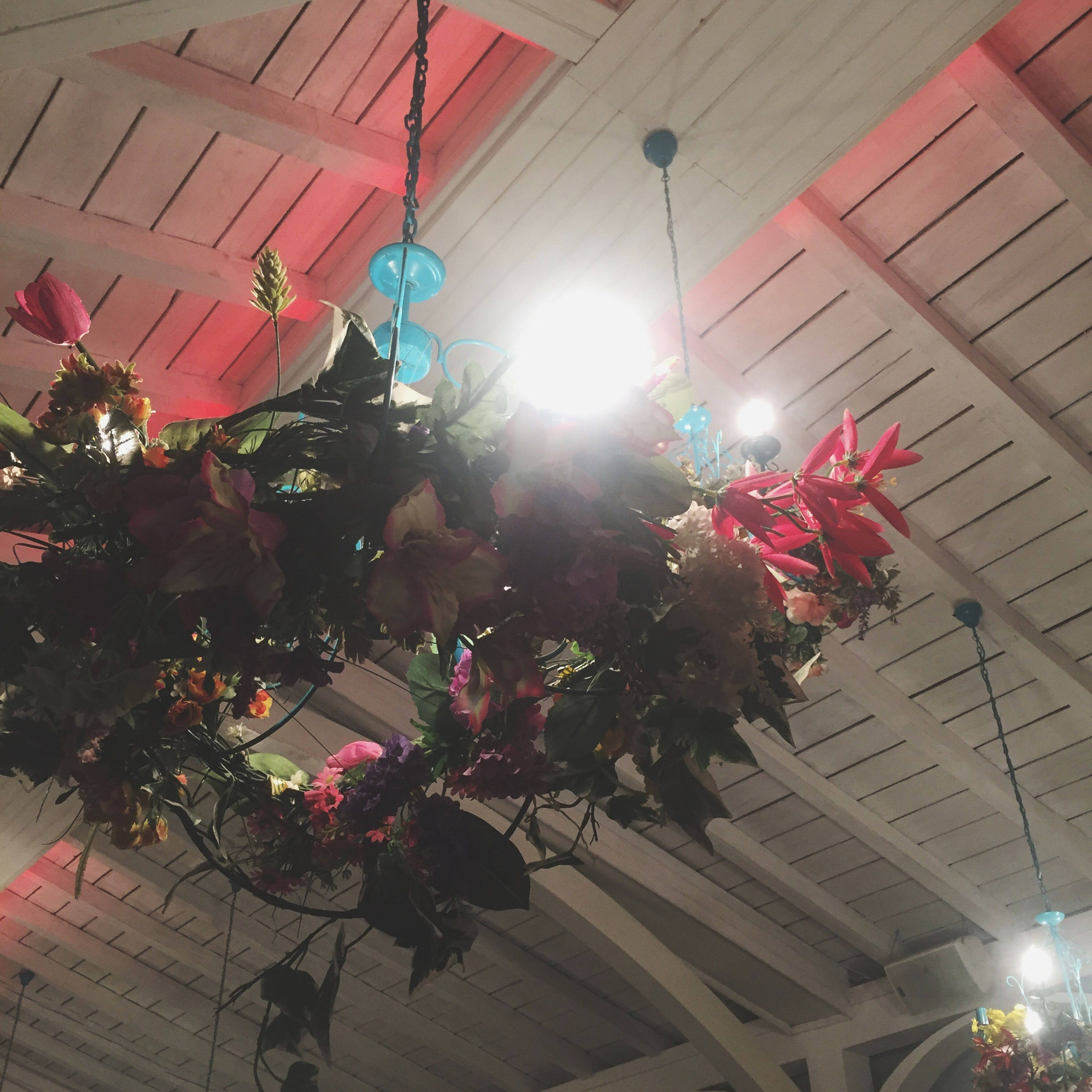 low angle view, illuminated, lighting equipment, celebration, christmas, flower, no people, indoors, hanging, christmas lights, tree, night, christmas decoration, architecture, building exterior