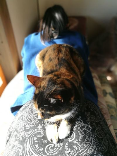cat on the hip Calico Cat Sitting Girl Relaxation Hip Love Cat Cute Cat Pets Domestic Cat Animal Themes One Person Portrait Day Indoors