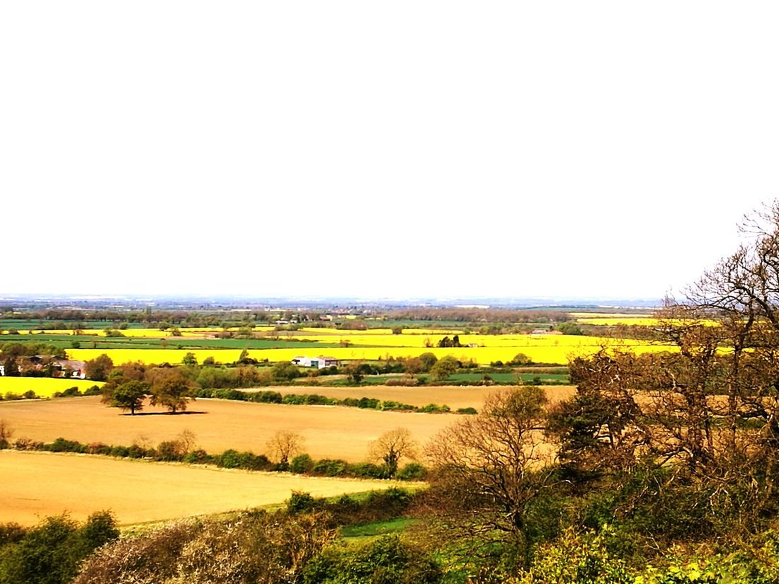 The Vale. Agriculture Rural Scene Crop  Field Beauty In Nature Scenics Cultivated Landscape Outdoors Day Growth