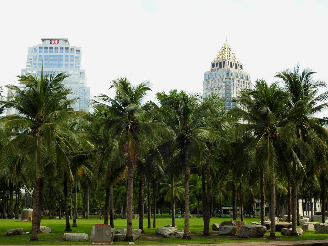 Investing In Quality Of Life Thailand Beauty In Nature City Life Bangkok Lumpini Park The Week On EyeEm Sunny Day 🌞 Greeny Park Colors Of Thailand Thailand🇹🇭 Summertime Urban Thai City View  Skyscrapers Palms