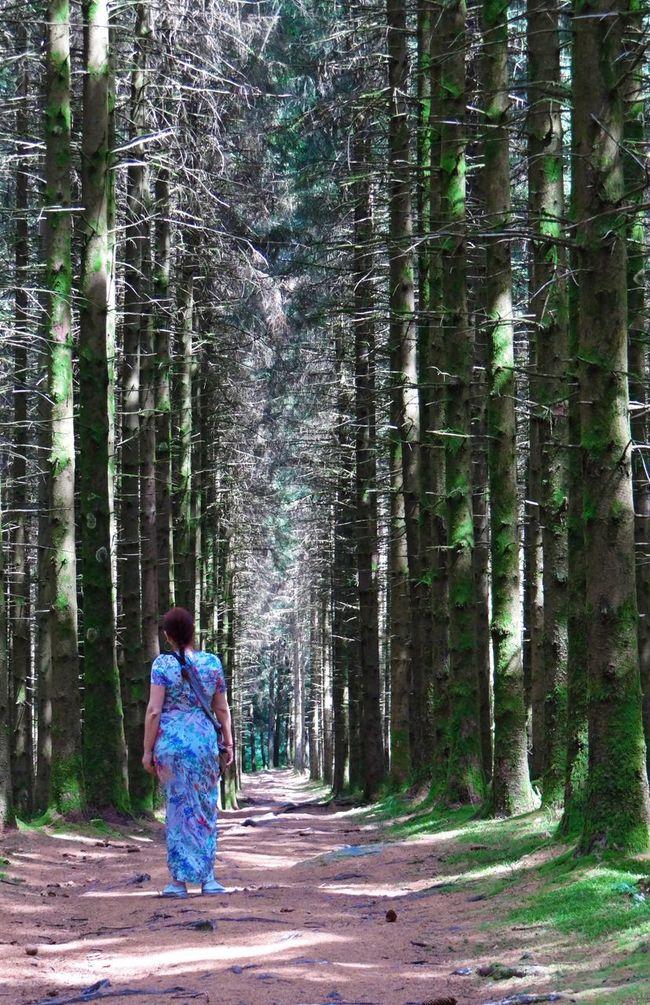 Promenade d'une fée ... Fée Forest Woman Magic Magicmoment Creuse Limousin France Trees Pins Photography Franckhenry