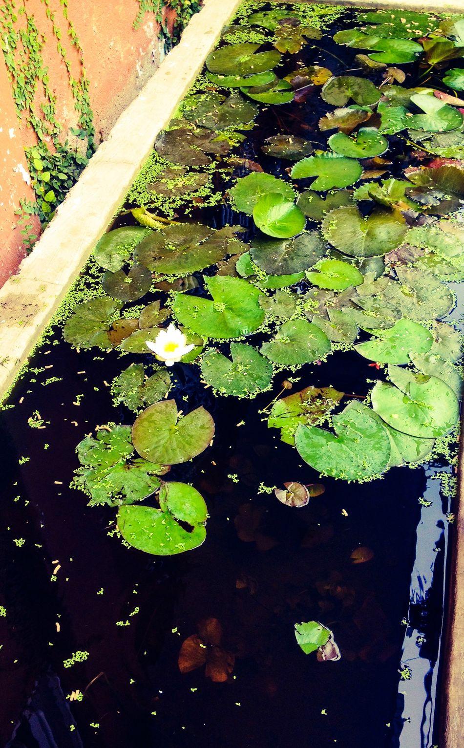 En mi colonia vecina Aguaestancada llena de Pecesitos Zihuatanejo Mexico