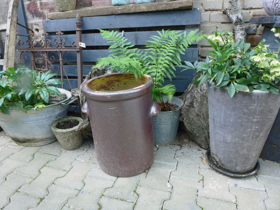 Architecture Elbe Elberadweg Fern Green Color Growth Leaf Nature Plant Potted Plant Tangermünde