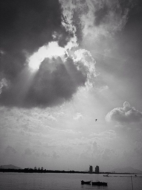 Black And White Chonburi ,Thailand Popular Photos Bangsean Petrel