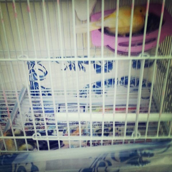Couple Cute Bird Sylvester is taking tweetys place in the nest while she eats :$ so cute Love Bird Love