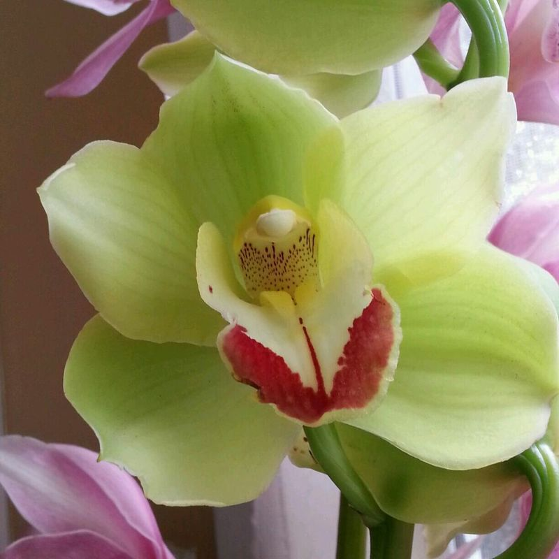 https://youtu.be/1hUrR44RlcY ✋💚💜😎Congratulations! You Made It😎💜💚🙋 Im Singing Are You Sorrynotsorry Tranquility From My Point Of View Check This Out Exceptional Photographs Things I Like Music Makes Me Feel So Good From Your Point Of View Serenity Colour Image Indoors  Flower Collection Women Who Inspire You Sunshine For My Friends That Connect Orchids Beauty In Nature In The Mood For Love Floral Flower Photography Orchid Blossoms Orchid Flower Green . 051014