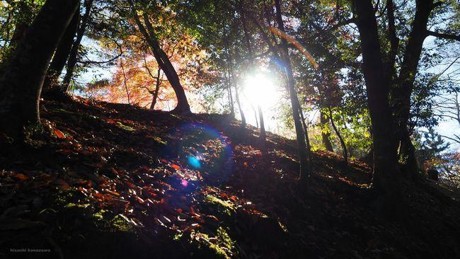 Narita 成田山公園 Sunrise Sunshine Nature Autumn Colors Autumn Leaves 紅葉を見に行こうよう 紅葉