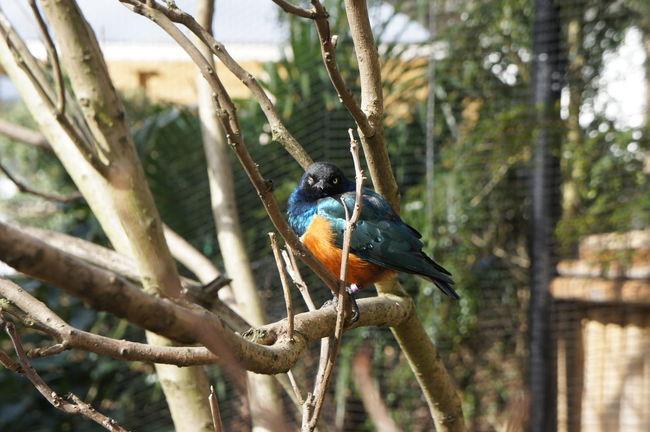 Bird Bird Photography Birds_collection Wildlife Wink Zoo Birds Of EyeEm  Birds_n_branches Birdphotography Bird Watching Winking Wink!
