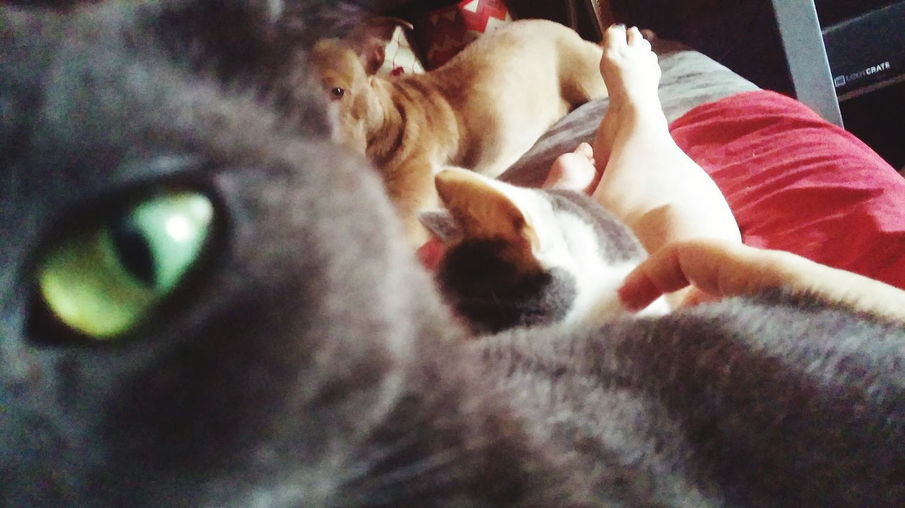 Cat's eye view Cat's Eye Green Eyes Shadow Is Her Name Rescue Her First My Fur Babies Spoiled Rotten Brats Sharing The Couch Pet Photography  All Rescues