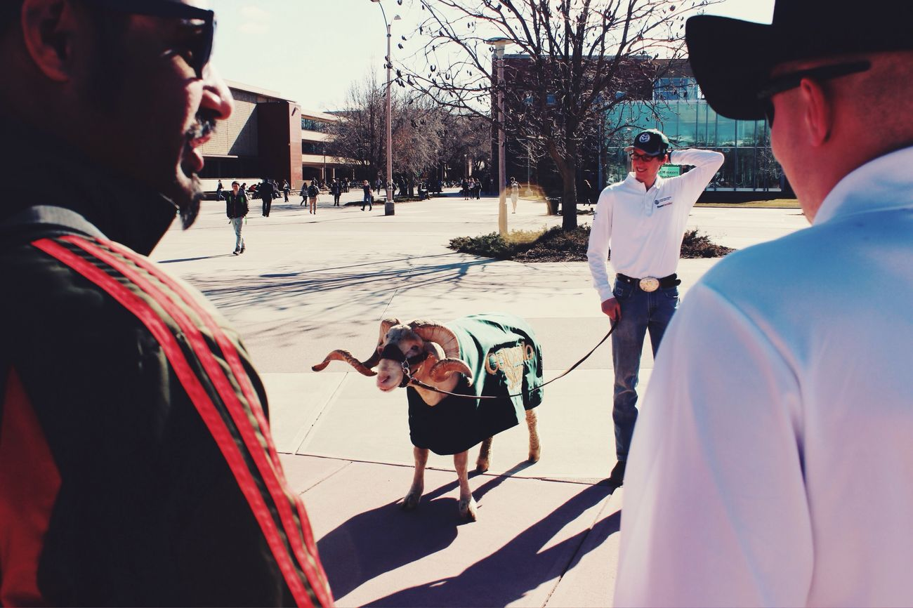 Service Animals CAM the Ram no. 24 always enjoyed being the center of attention. Farewell, friend!