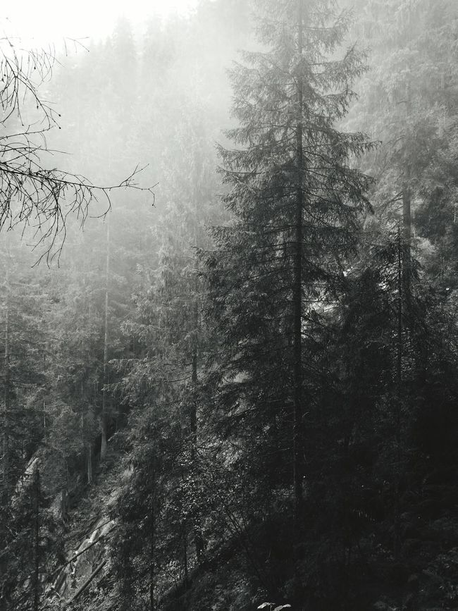 Krl Forest Tree Weather Cold Temperature Nature WoodLand Tree Trunk Outdoors Majestic Fog Day Non-urban Scene Check This Out Österreich Krimmler Wasserfalle Krimml Waterfalls Krimml Krimmlerwasserfälle Krimml Wasserfal Krimmler Krimmler Tauerntal Enjoying Life Taking Photos