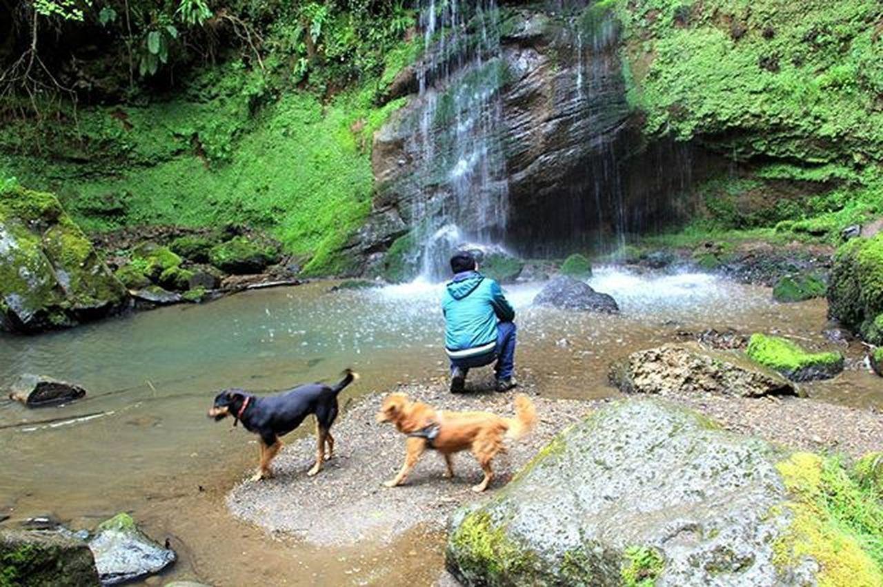 Cascata Cani Dogs Qene Natura Landscapecaptures Uomo Fotografando Waterfall Ujvare Roccamonfina