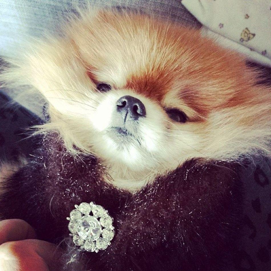 Genevieve got a fur shrug from Santa! Shelovesit Vi Mybaby Prettygirl russianminx babyfox