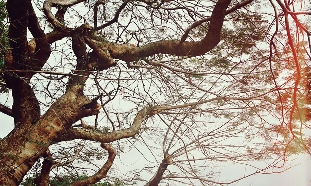 Branch Tree Low Angle View Nature Bare Tree No People Outdoors Sky Day Beauty In Nature Close-up Treetop Shekelsphotography Nature Photography The Week Of Eyeem The Week On EyeEem Landscape Nature_collection Naturelovers Nature On Your Doorstep Beauty In Nature Nature Green Color Growth Tree