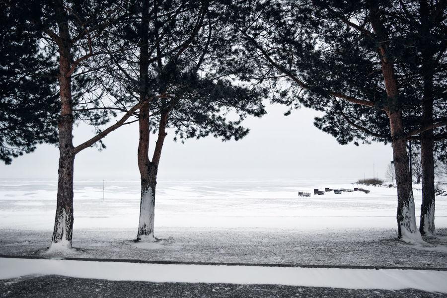 Beach Cold Temperature Landscape Sea Snow Trees Winter
