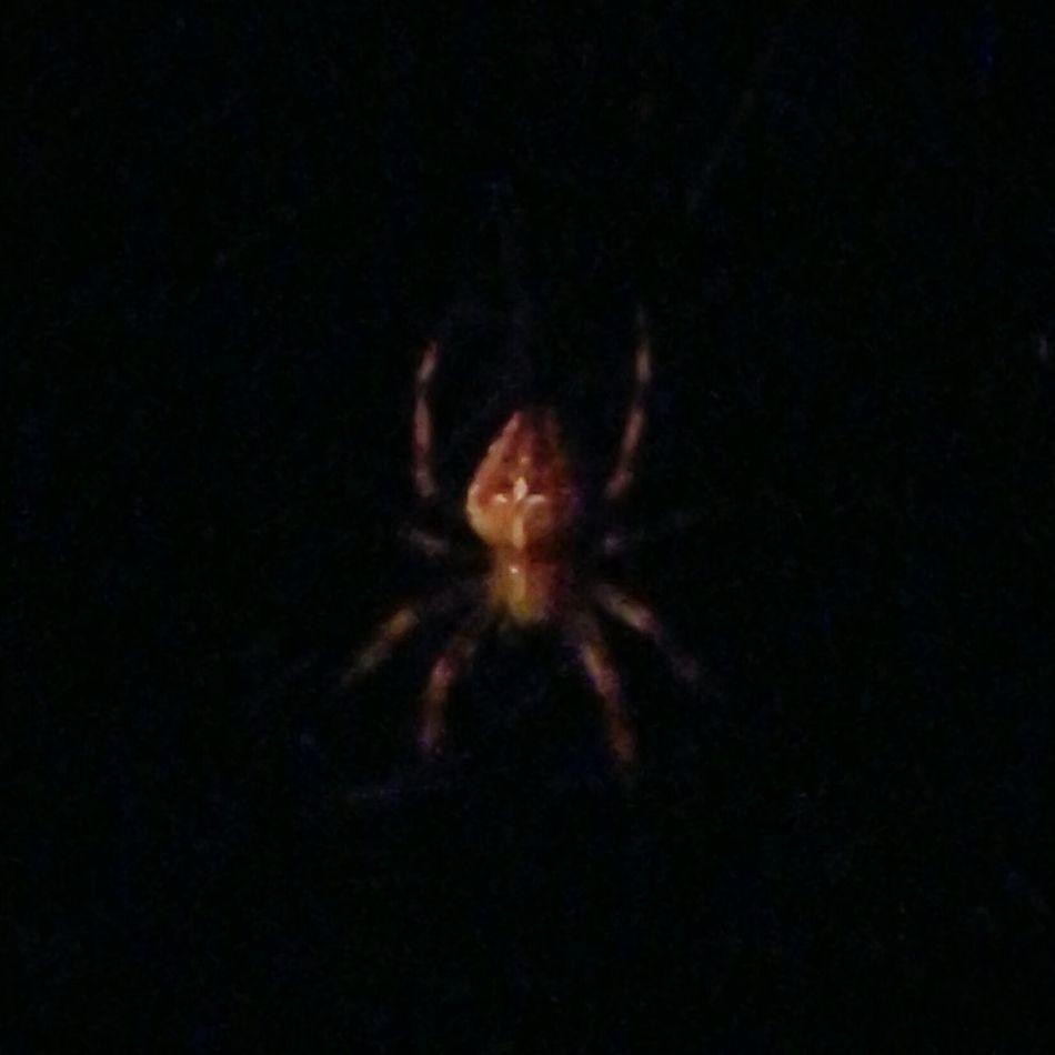 Kreuzspinne Darkness Hanging Around Home Garden First Eyeem Photo