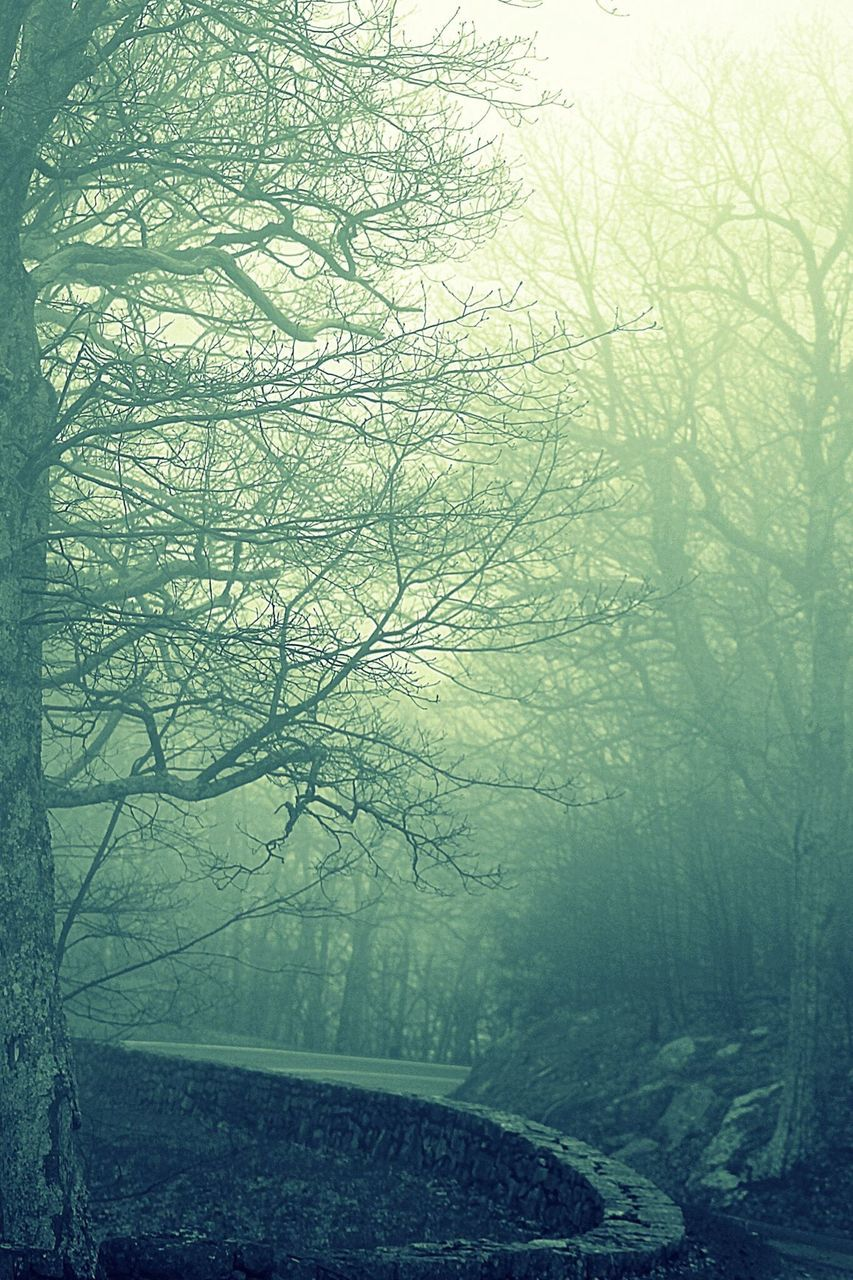 tree, bare tree, fog, nature, tranquility, tranquil scene, beauty in nature, branch, no people, landscape, autumn, outdoors, scenics, day, winter, beauty, sky