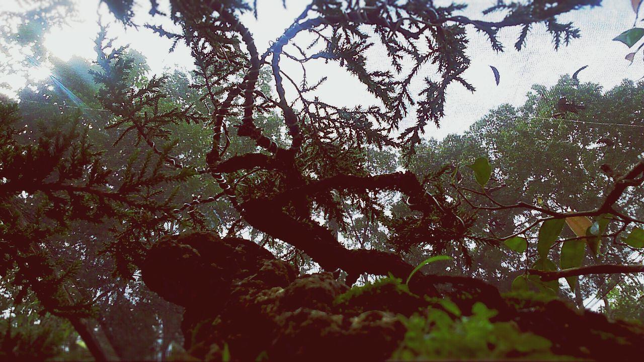 miniature tree Bonsai Tree Nature Silhouette