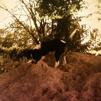 The King of the (Sand)Hill