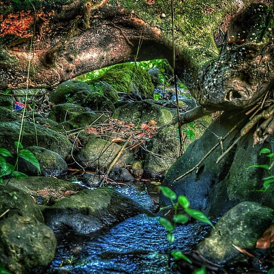 Nature_wizards Nature_perfection NikonD7100 Outdoor Bushments Grenada Caribbean_beautiful_landscapes Hdr_beautiful_landscapes Hdr_dominicanrepublic Hdr_pics Ilivewhereyouvacation Islandlivity Ig_exquisite Ig_caribbean GOLDENCLiCKS