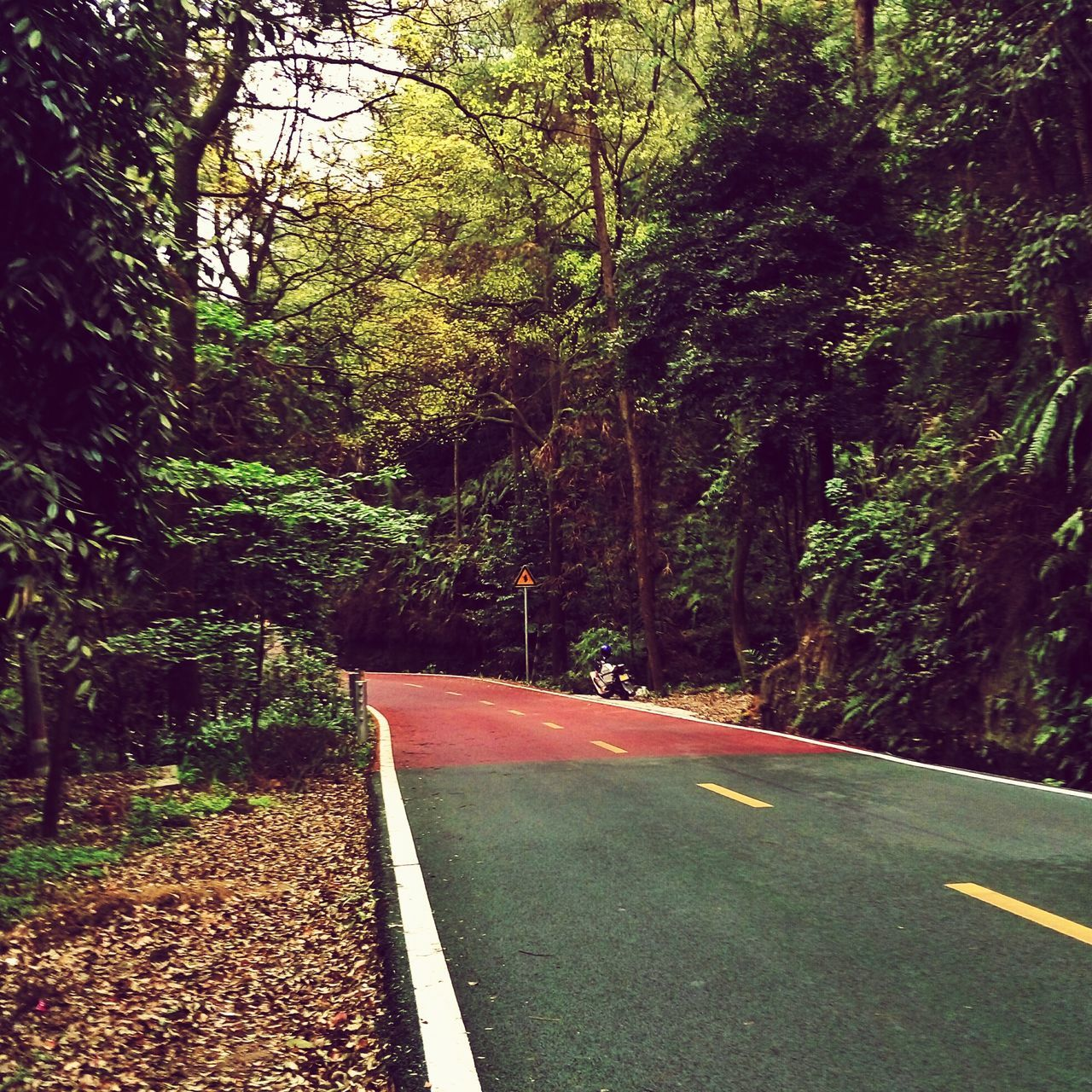road, tree, transportation, the way forward, nature, tranquility, outdoors, no people, day, forest, growth, beauty in nature
