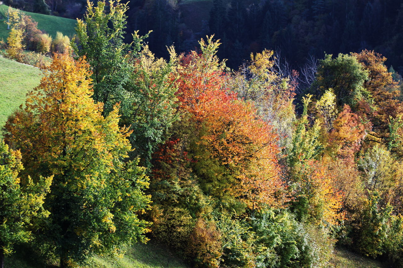 Autumn Autumn 2016 Beauty In Nature Day Fiè Allo Sciliar Full Frame Green Yellow Orange And Red Growth Italy Nature No People Outdoors Südtirol Trees And Bushes