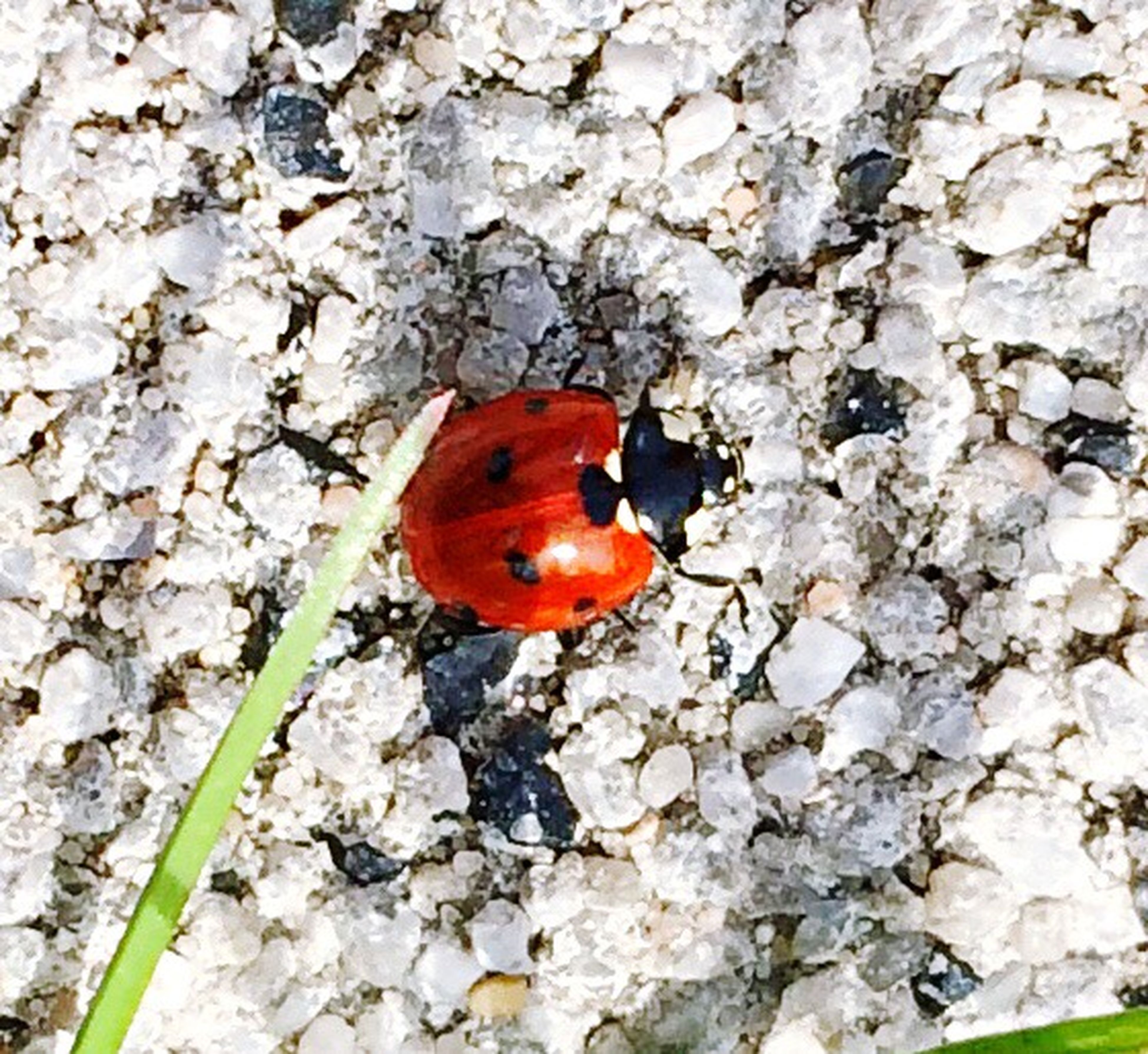 animal themes, red, animals in the wild, wildlife, one animal, rock - object, ladybug, bird, close-up, nature, zoology, outdoors, day, full length, no people, rock, high angle view, orange color, perching, multi colored