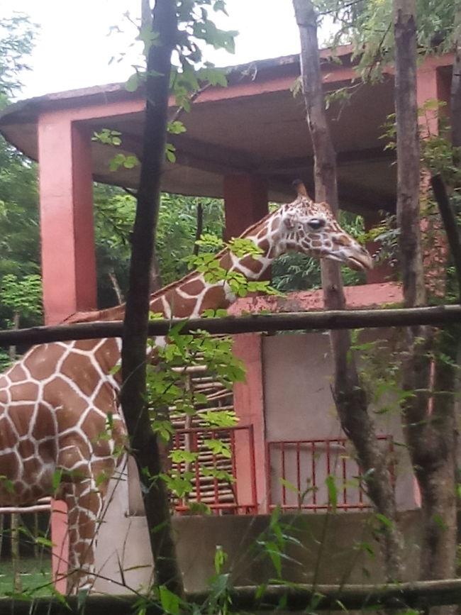 Wildlifephotography Giraffe♥